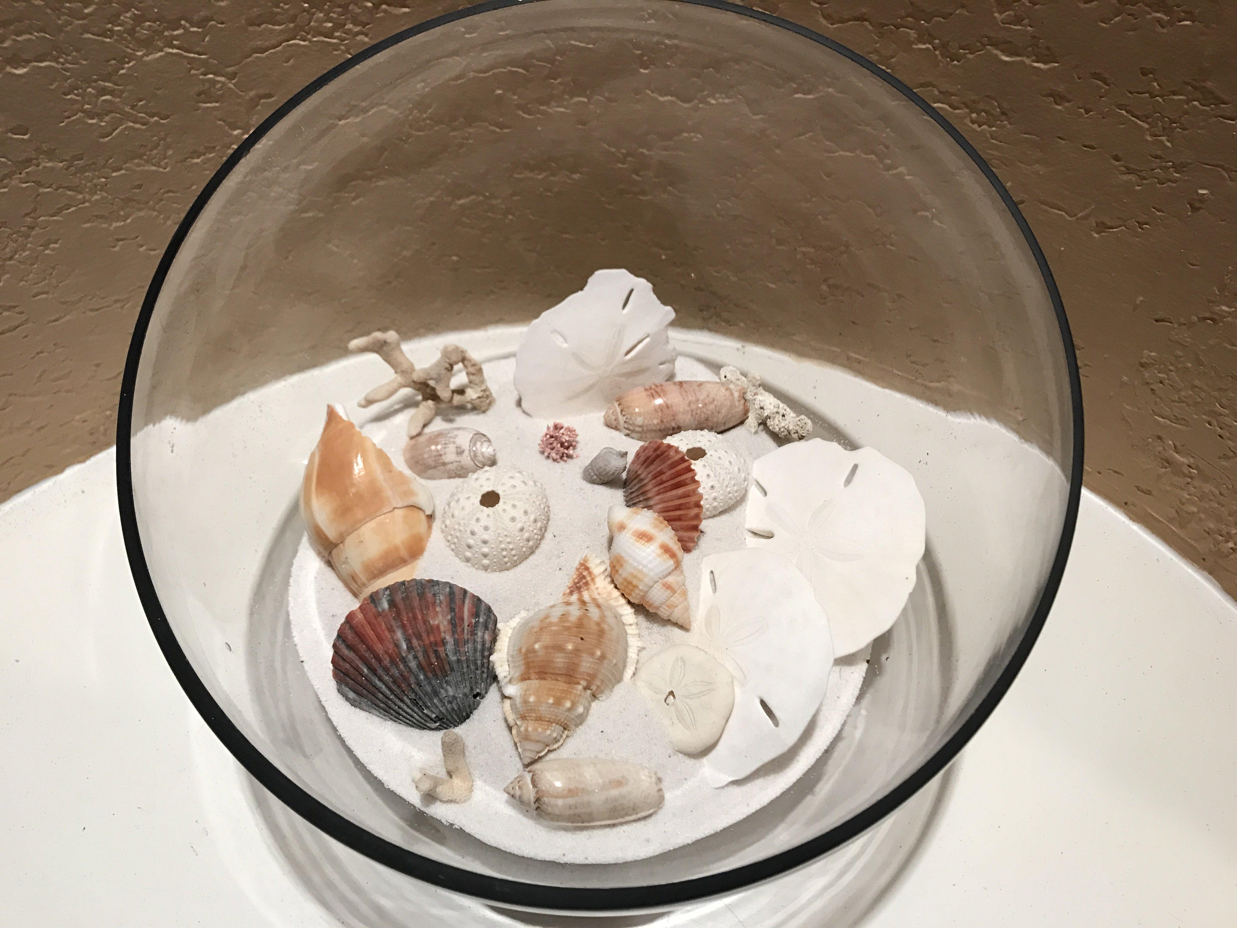 destin shells at sandnsol