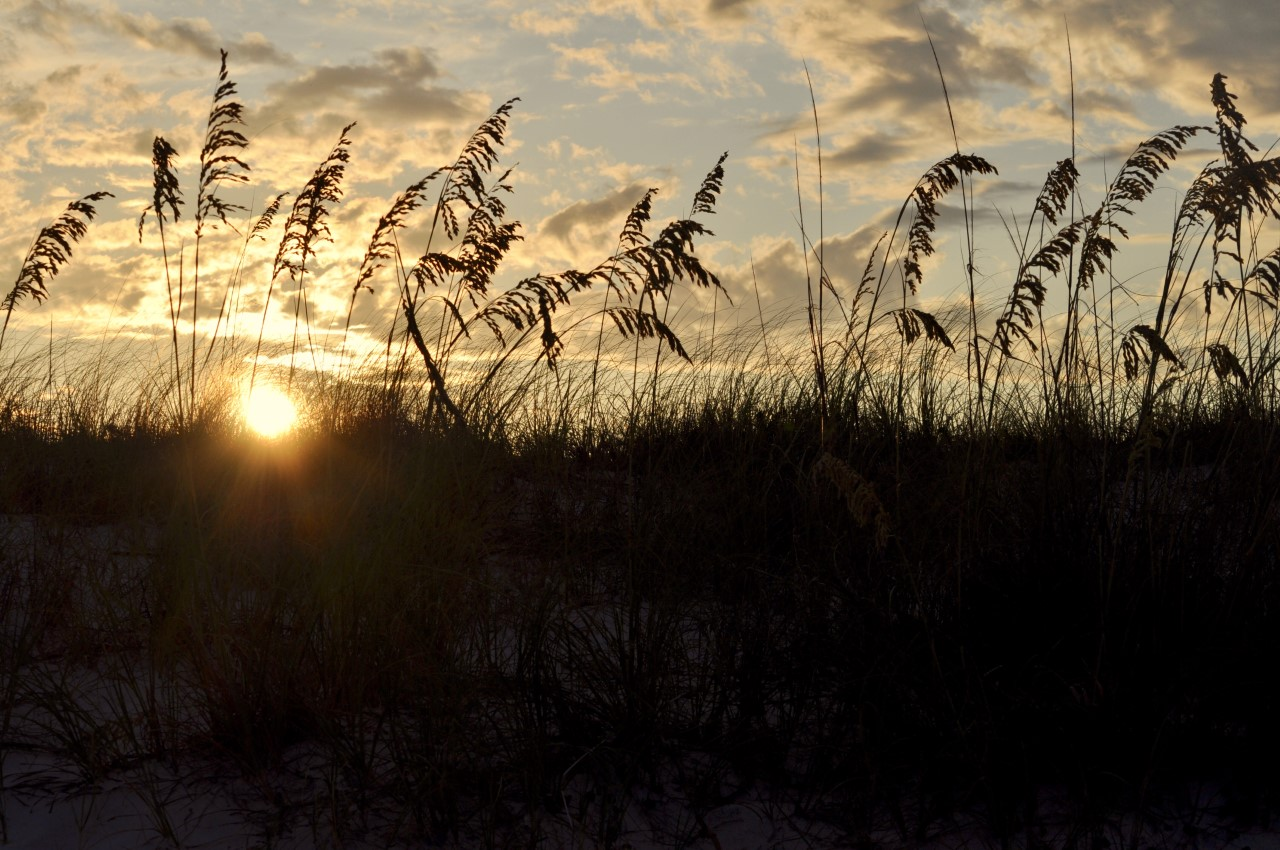 sea oats destin sunrise
